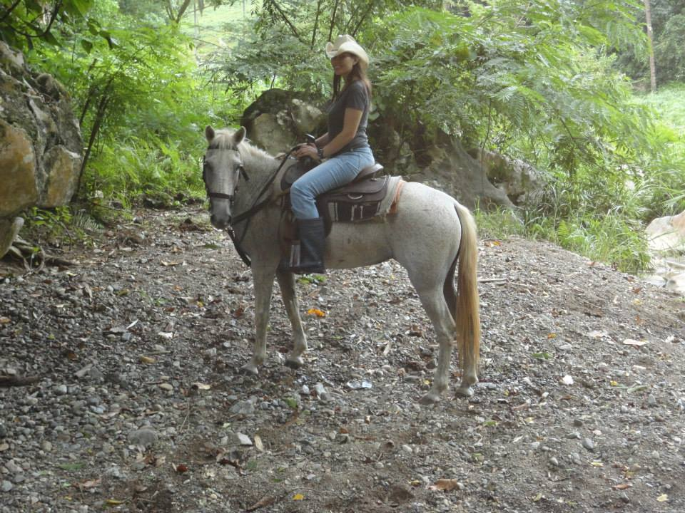 Q Horses For Sale Horses for sale   Big ...